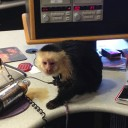 Monkey in the Studio
